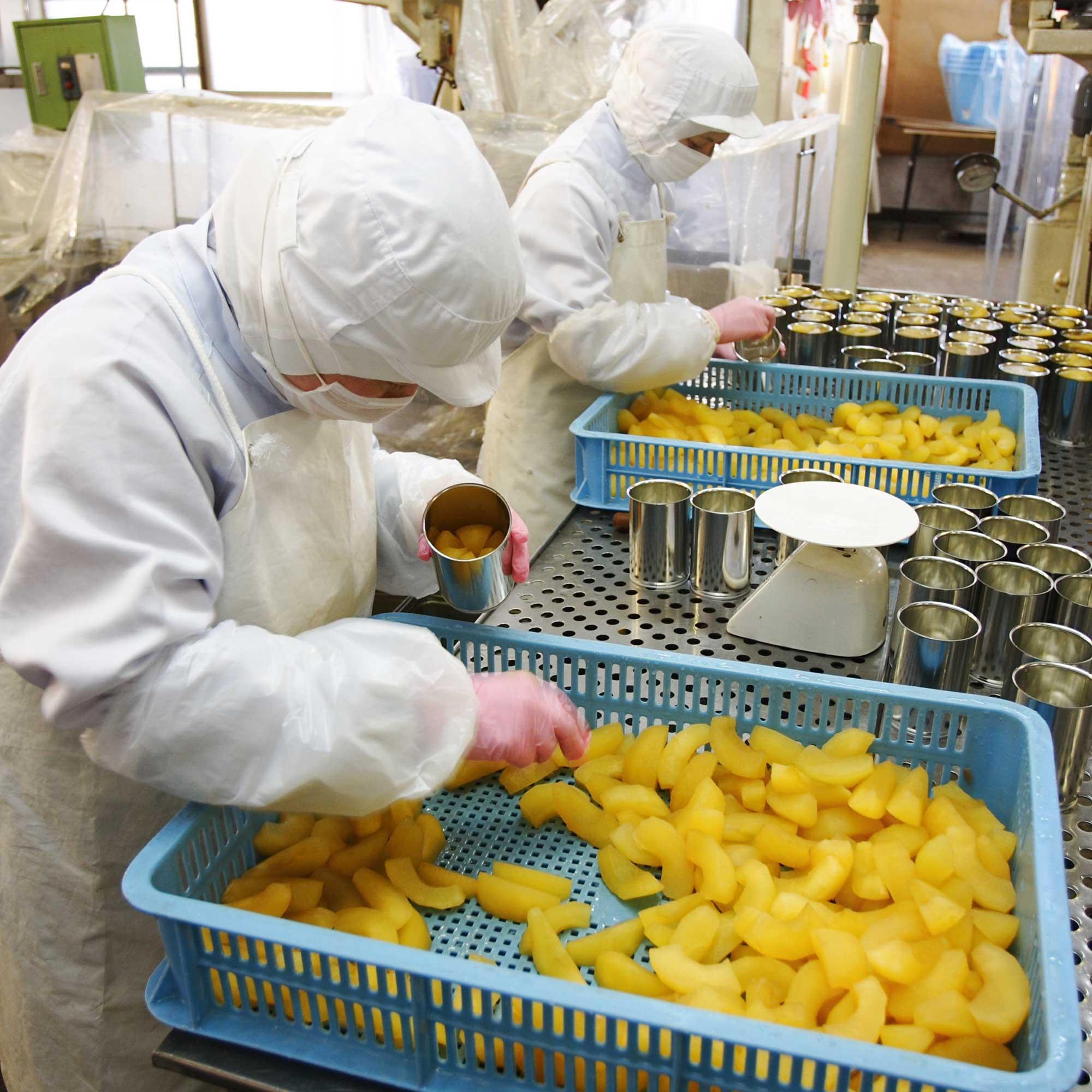 山形県アンテナショップおいしい山形 つくり手を訪ねて|宮澤食品株式会社:缶詰へ詰める工程も手作業で。砂糖とレモン汁だけでつくられたシロップも入ります。
