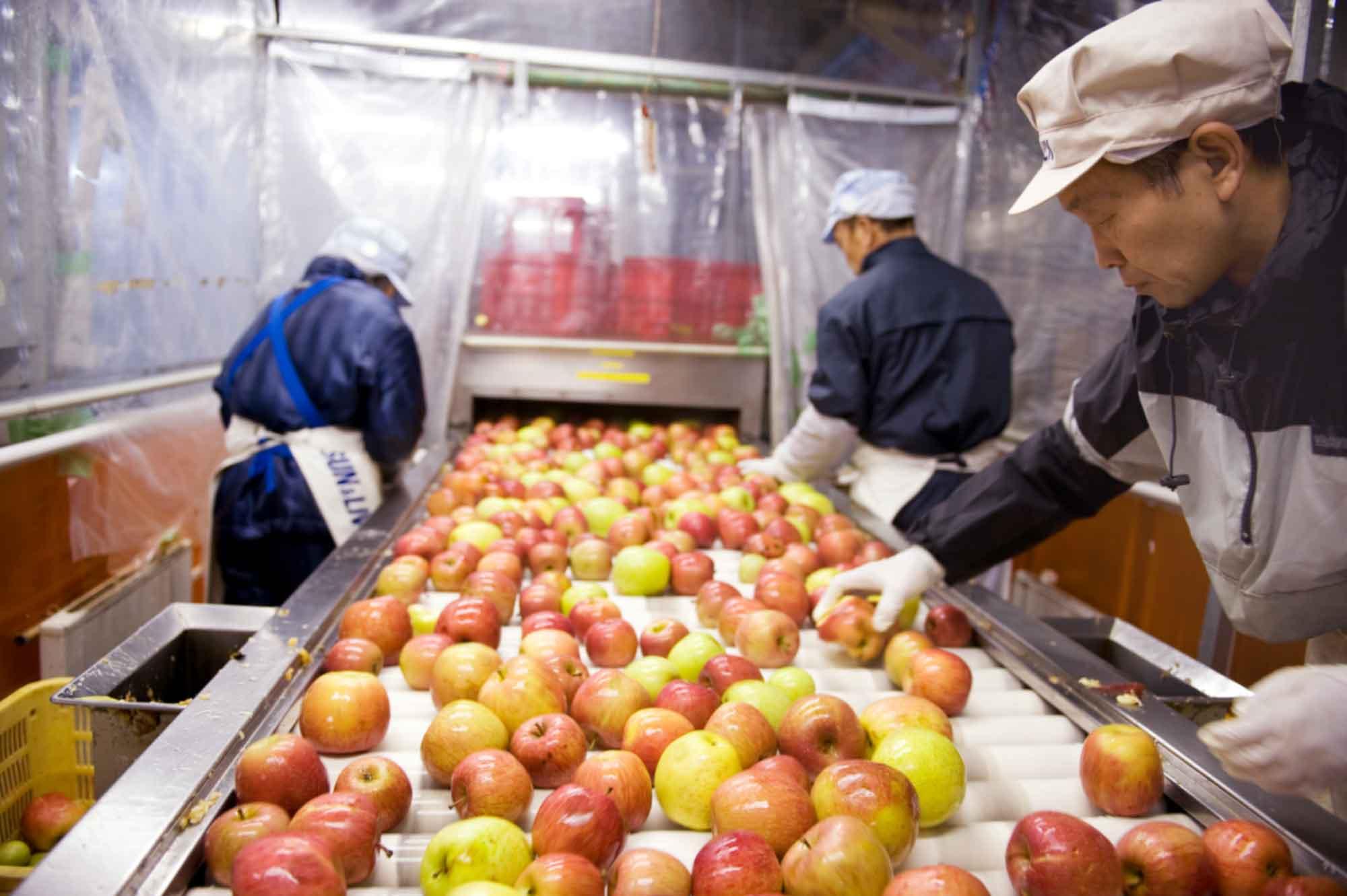山形県アンテナショップおいしい山形 つくり手を訪ねて|山形食品株式会社:洗浄後、痛んでいるりんごをスタッフの手と目によって選別。熟練の技が光ります。