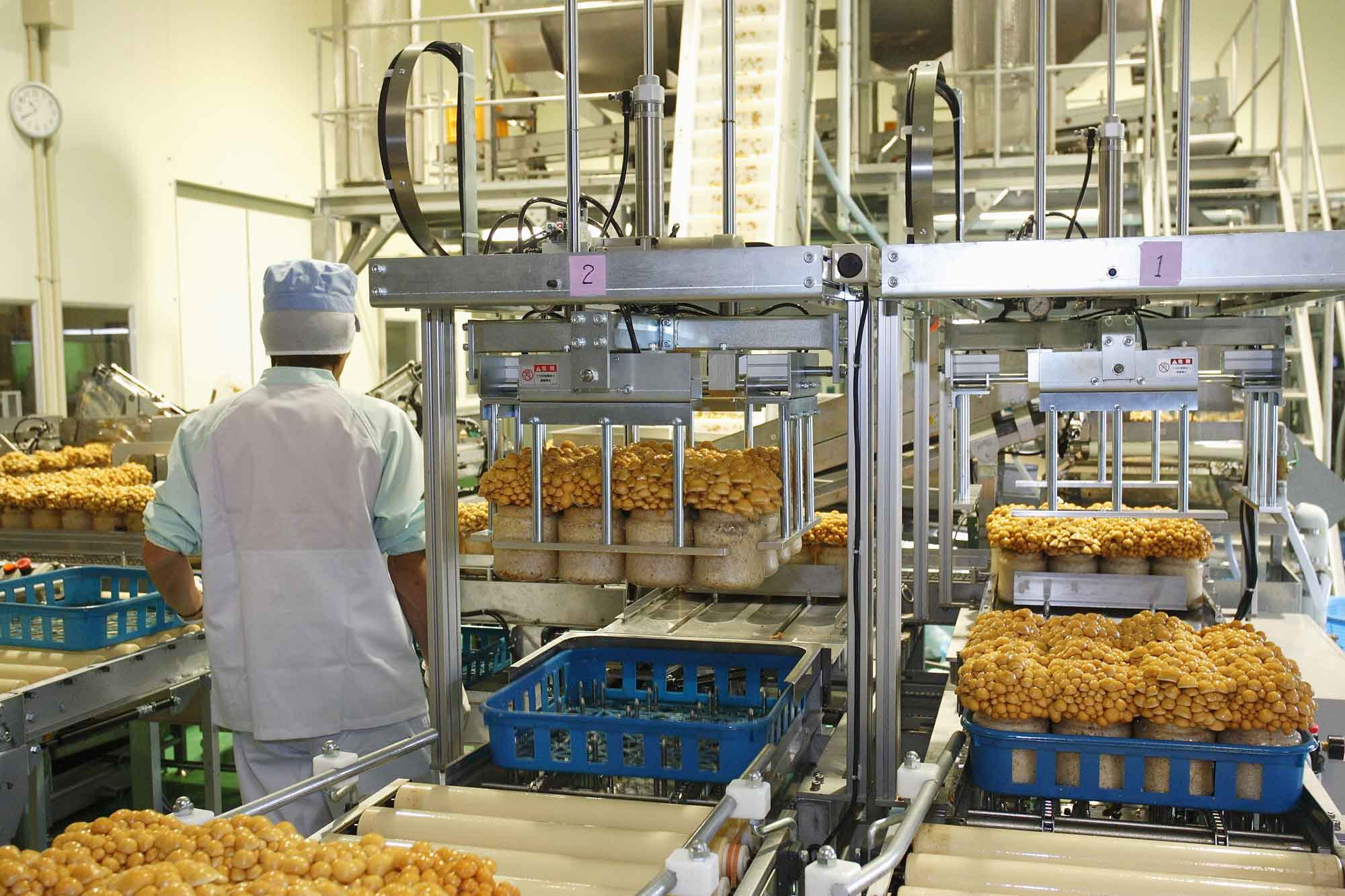 山形県アンテナショップおいしい山形 素材を訪ねて|菌床なめこ:                 なめこのサイズを選別する機械も導入されている加工場。県内外へ向けて出荷されています。