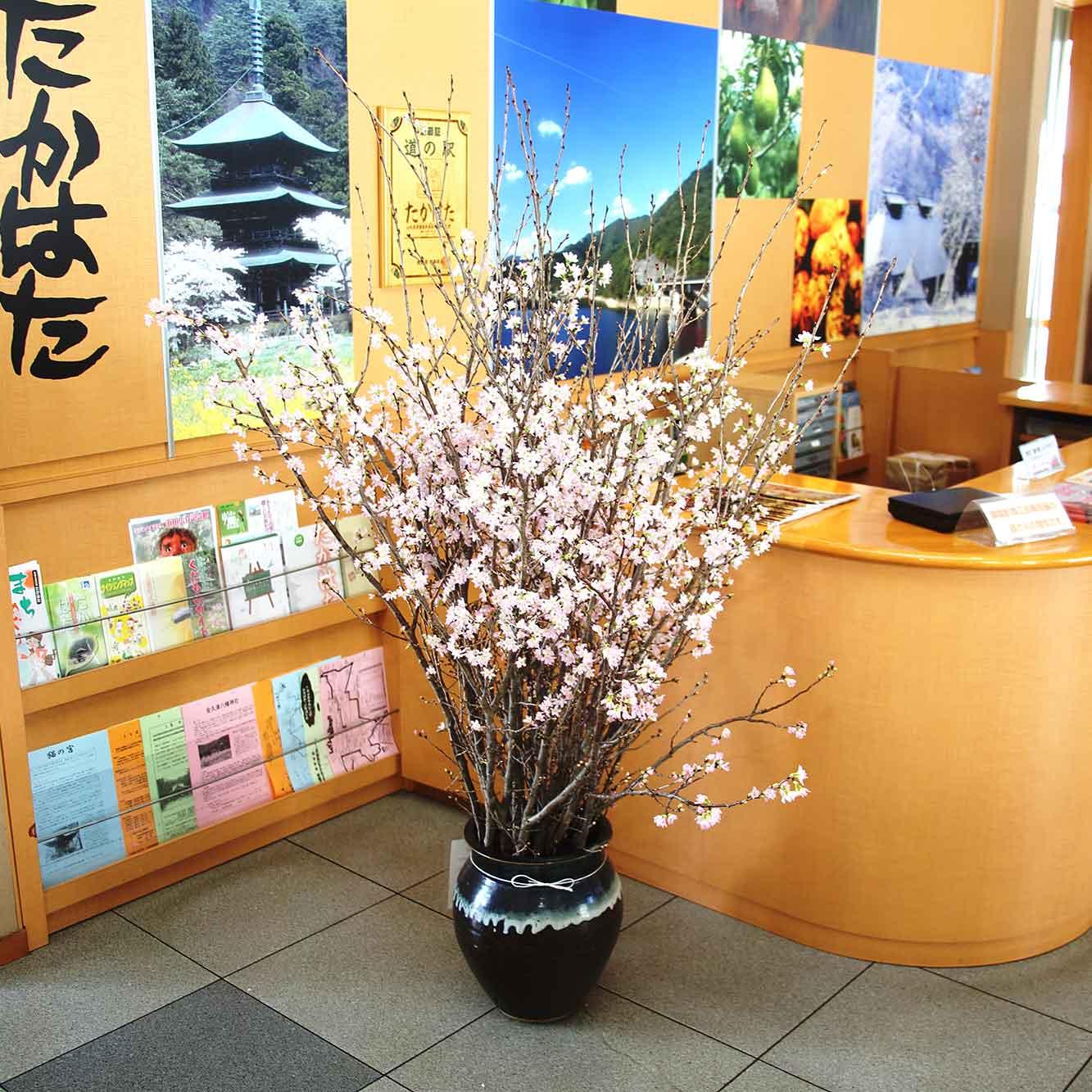 山形県アンテナショップおいしい山形 素材を訪ねて|啓翁桜:                     土屋さんの育てた啓翁桜が展示されている「道の駅たかはた」。訪れた人の目を楽しませています。