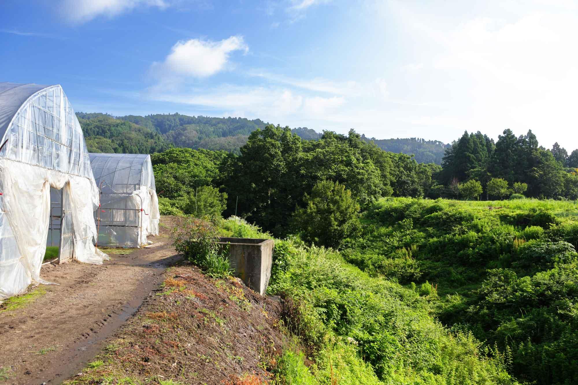 山形県アンテナショップおいしい山形 素材を訪ねて|おかひじき:                 山々に抱かれるような立地の横沢農園。すぐそばには小川も。