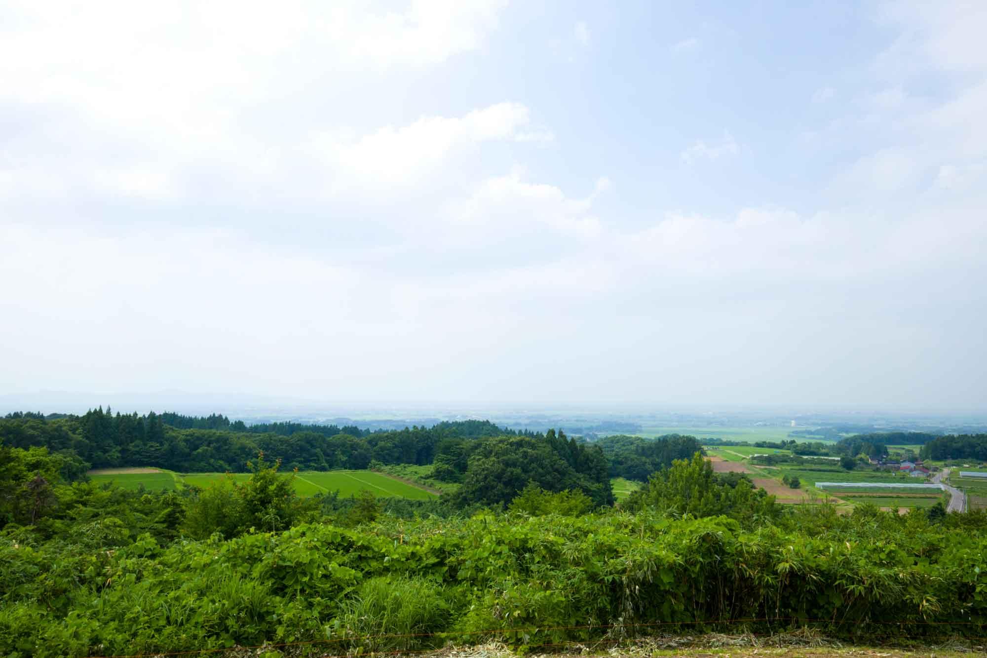 山形県アンテナショップおいしい山形 素材を訪ねて|ブルーベリー:                     園地の中には展望台も。雄大な景色を眺めながら摘みたてのブルーベリーが食べられる。