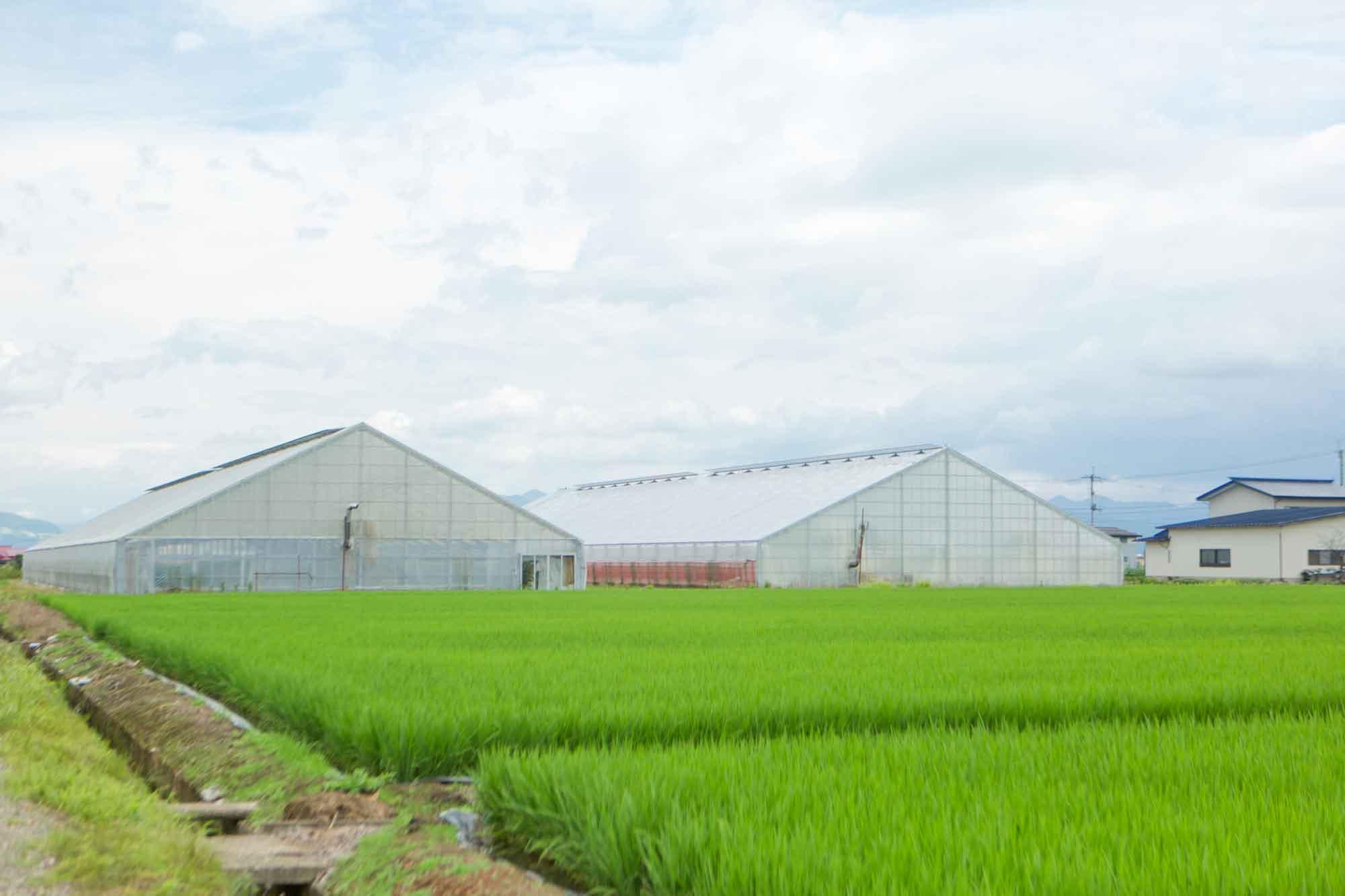 山形県アンテナショップおいしい山形 素材を訪ねて|米沢トマト:                     500坪のハウスが2棟、最盛期には2,500株ものトマトを栽培する島貫農園。