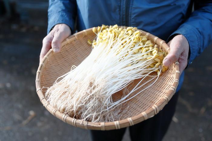 山形県アンテナショップおいしい山形 素材を訪ねて|小野川豆もやし:冬の間も、仕分けと発送作業が続きます。冬季間の仕事の確保こそ、北国の農業に必要なもの。