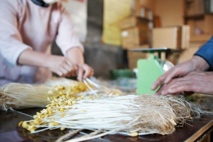 山形県アンテナショップおいしい山形 素材を訪ねて|小野川豆もやし:肥料は使用せず、ミネラルなどの栄養たっぷりの温泉水砂で育つ豆もやし。
